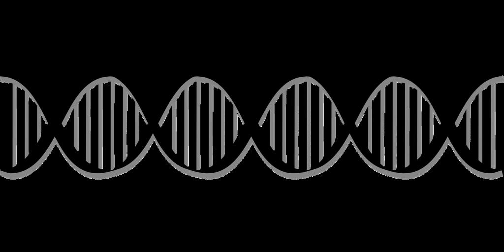 biologia_dna